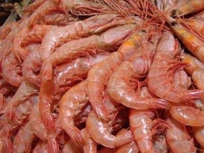 صید میگوی دریایی