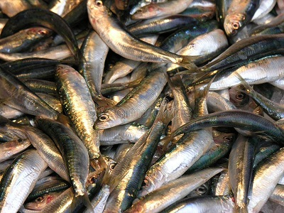 Fisheries production